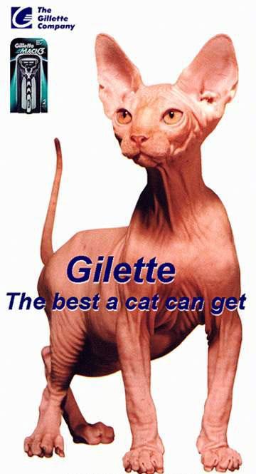 Gilette cicus
