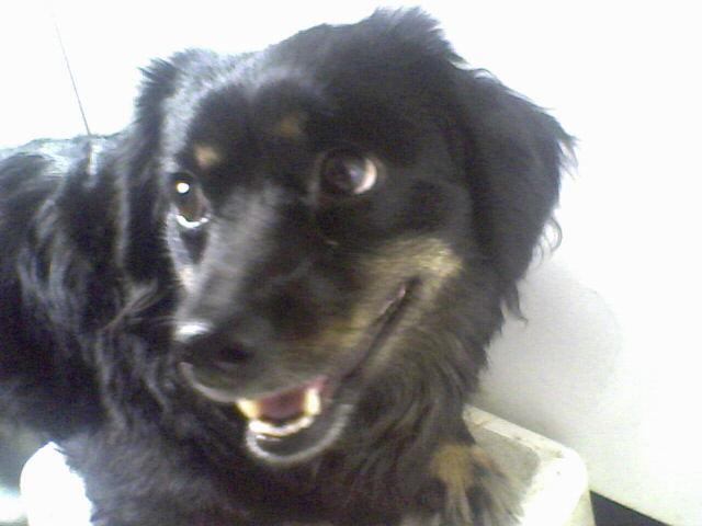 Idõsebbik kutyánk Husika,2 éves