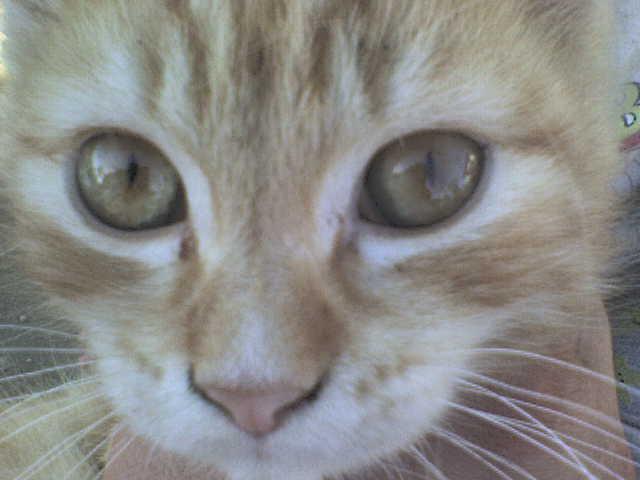 Az én Mici cicám