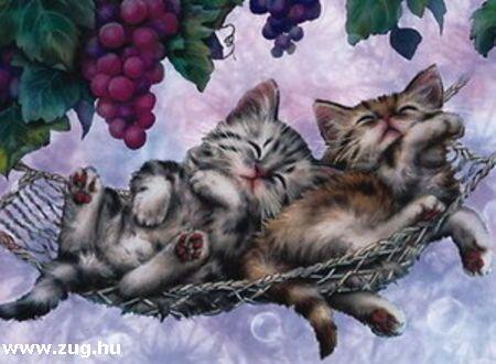 Régi falvédõkép két kiscicával