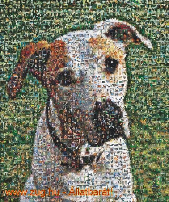 Mozaik - kutya