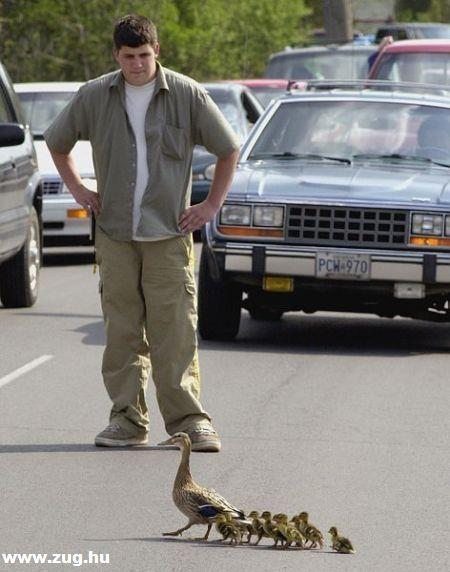 Forgalmi dugót okozó kacsák