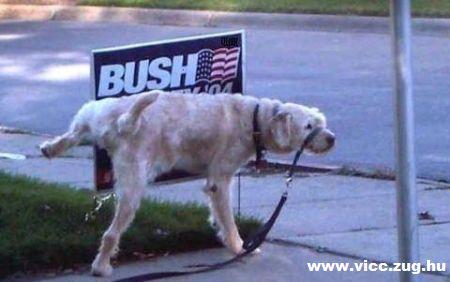 Nesze neked Bush!