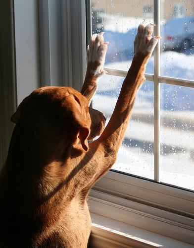 Kutya a meleg szobában - télen ez a legjobb neki!