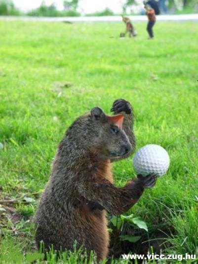 Õrült golfosok!