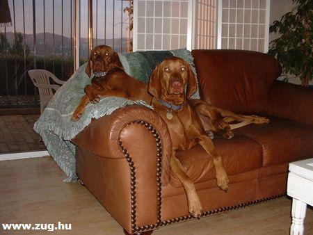 Kényelmes ez a bõr kanapé