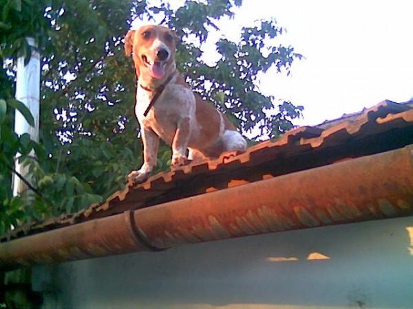 Kutya a házetön