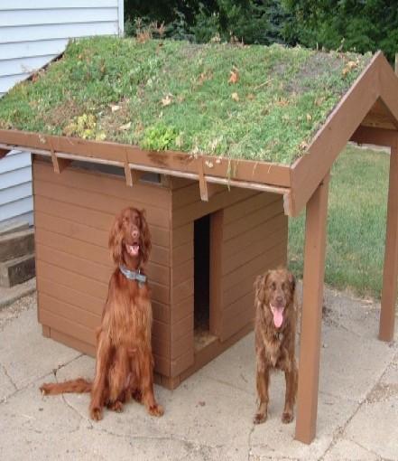 Kutyaház, kutyalak, kutyaodu