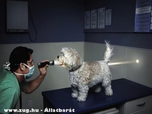 Kutya röntgen