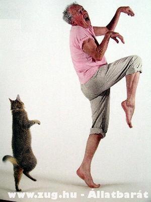 Hogyan tanítsuk meg a macskát járni:)