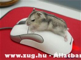 Egerek :D