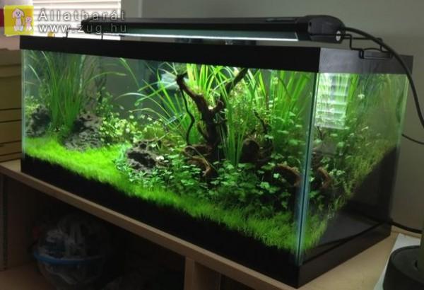 Akvárium - halaink luxus birodalma