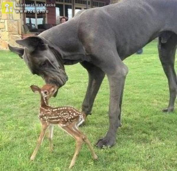 Dog és őzgida :)