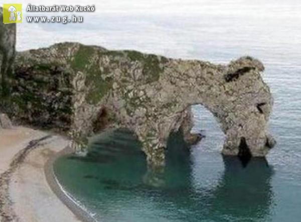 Egy kutya sziget!
