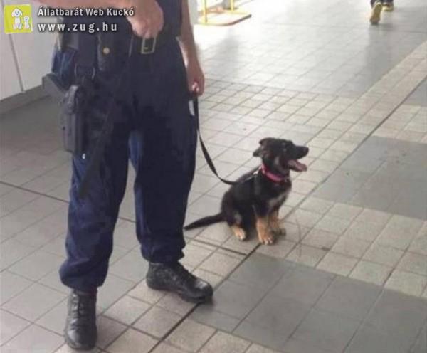 K9 - rendőrkutya gyermek
