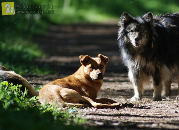 Kóbor kutyafalka