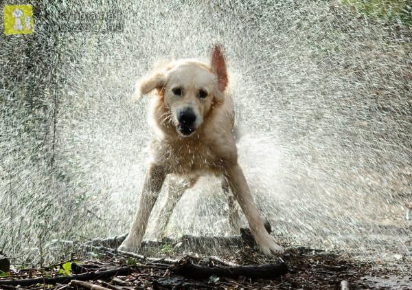 Kutya fürdetés