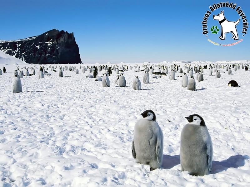Pingvin misszió :)