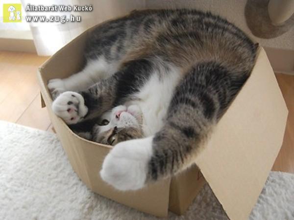 A cicák bármilyen pózban tudnak pihenni