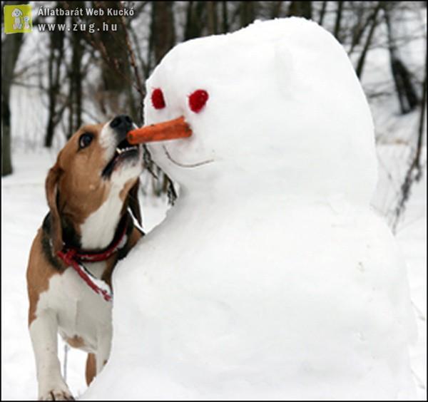 A hóemberépítő kutyus