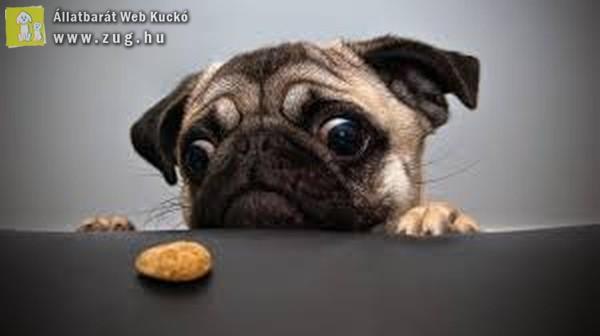 A kutyus és a dilemma