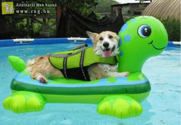 A kutyus és a teknős