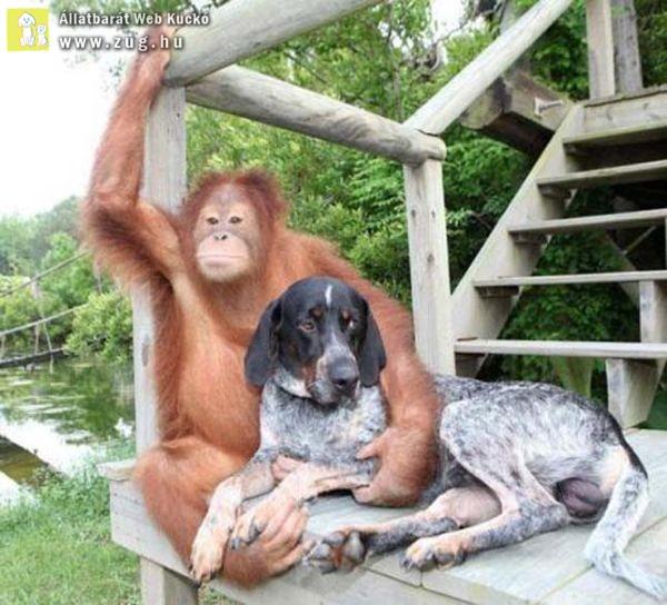 A majom és a kutya különös kapcsolata