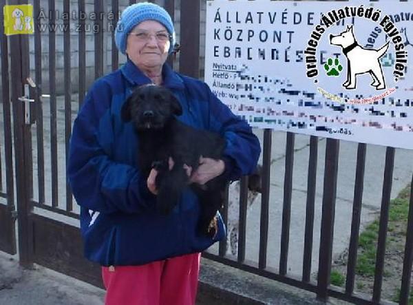 Állatbarátok adóegyszázalék felajánlásának is köszönhetően szerető Gazdihoz került Tib