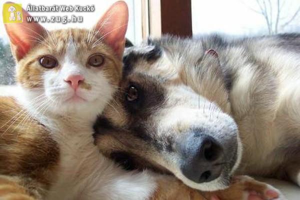 Állati közös kép