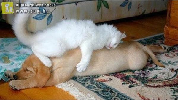 Állati lustálkodás