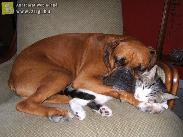 Állati összebújás