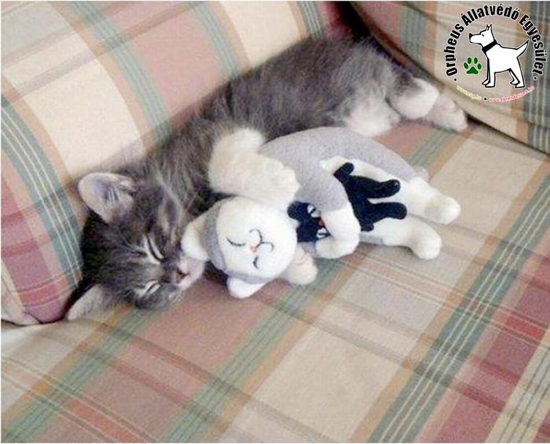 Alvás cica módra