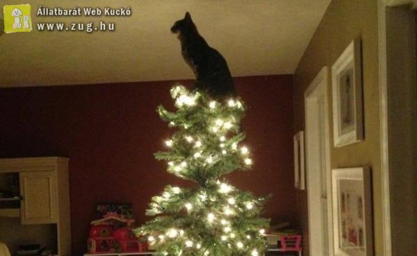 Amikor a cica akar lenni a csúcsdísz