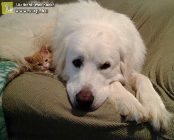 Apró cicus és a nagy kutyus