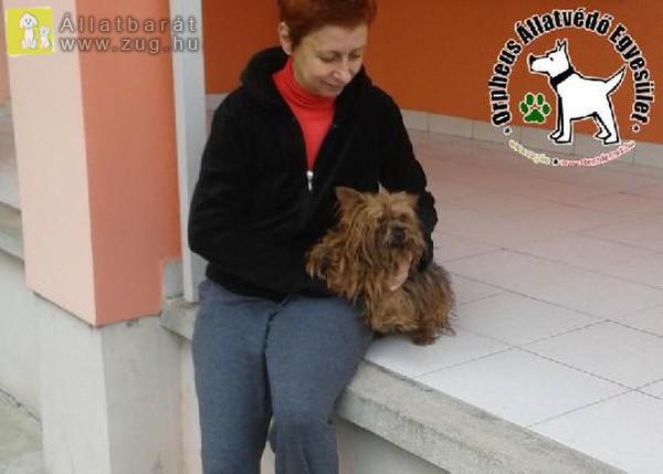 Az Szja 1 százalék felajánlásoknak is köszönhetően Brúnó szerető Gazdihoz került