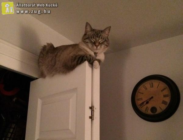 Az ajtó tetején is lehet pihenni