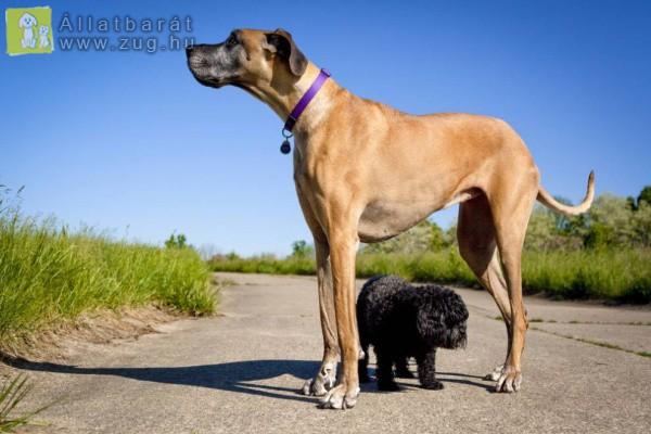 Az apró és az óriás kutyus
