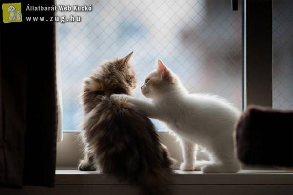 Barátkozó cicusok