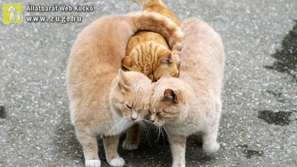 Barátkozós cicák