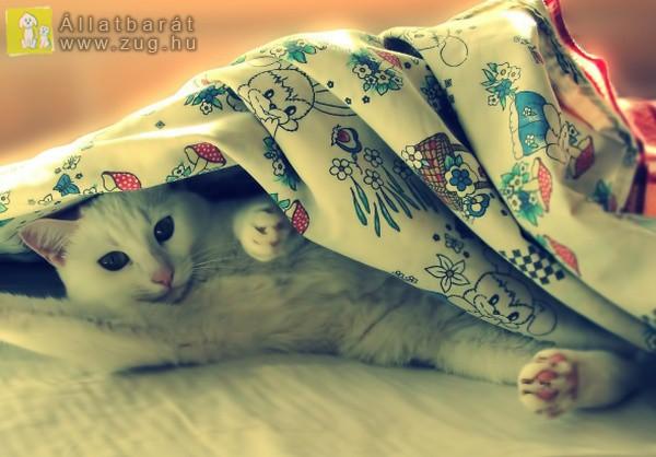 Bújócskázó cicus