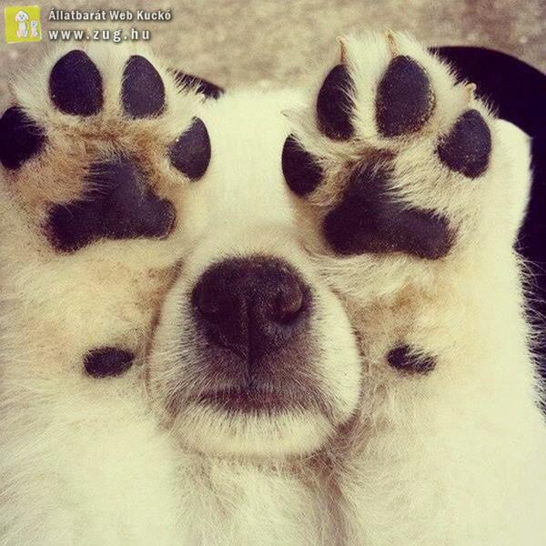 Bújócskázó kutyus