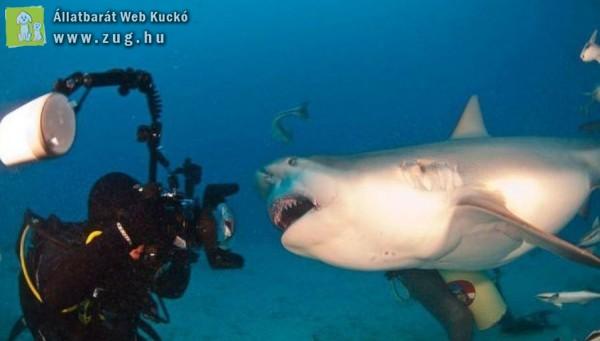 Cápa fotózás