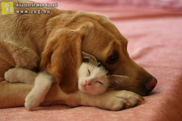 Cica szeretgetés