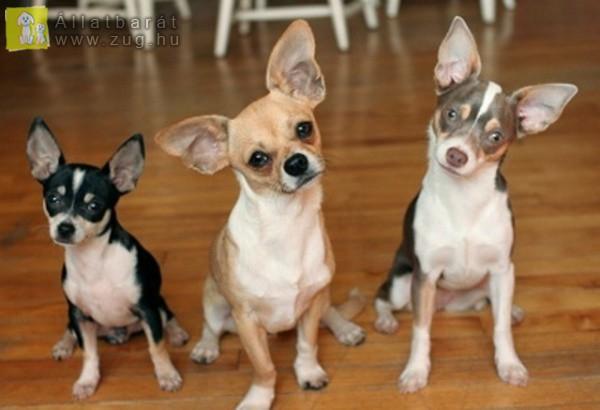 Csodálkozó kutyusok