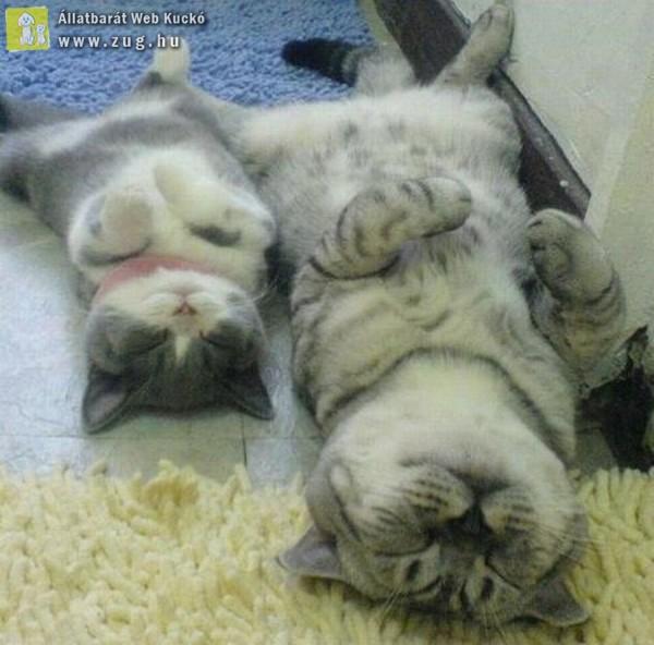 Délutáni cica pihenő