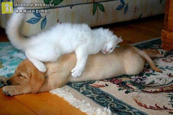 Délutáni pihenő cica módra