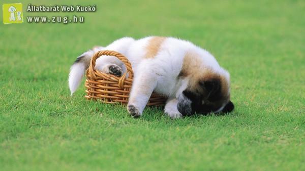 Egy kis pihenő