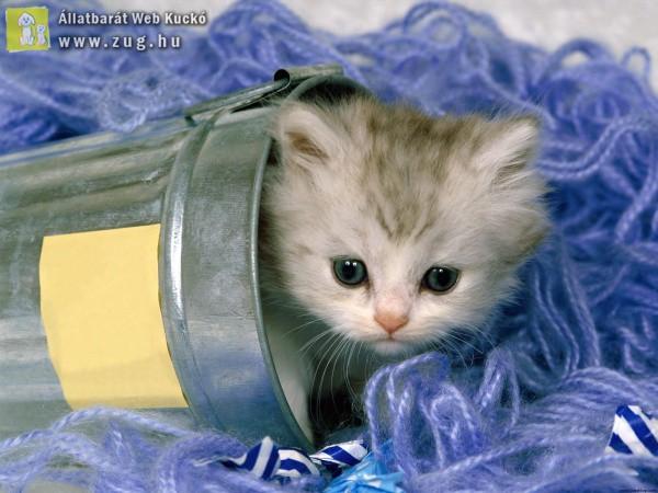 Egy vödörnyi cicus
