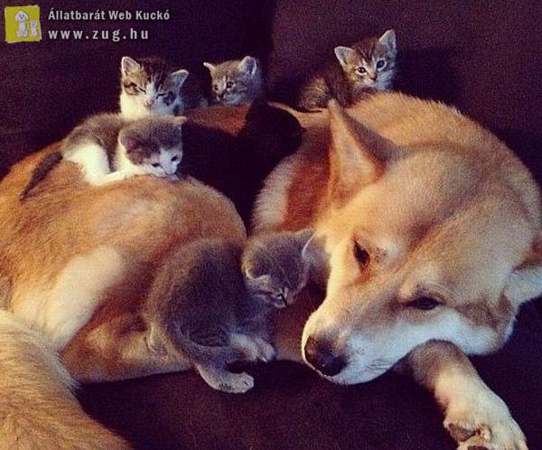 Együtt a legjobb pihenni
