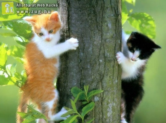 Fára mászó cicák
